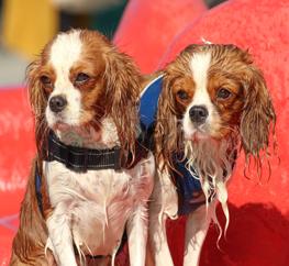 18e editie Hondenzwemmen